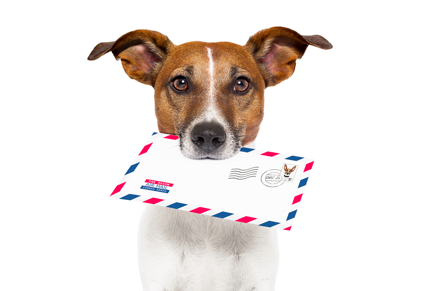 Image result for dog writing letter