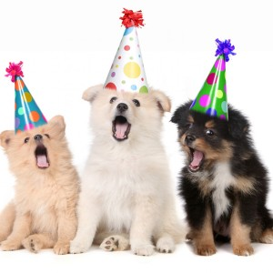 Puppies-Singing-Happy-Birthday-7668762